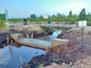 Dry season gets under way, efforts to protect peat ecosystem in Sumatra reinforced
